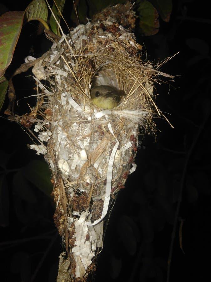 L'uccello è amore! immagini stock libere da diritti
