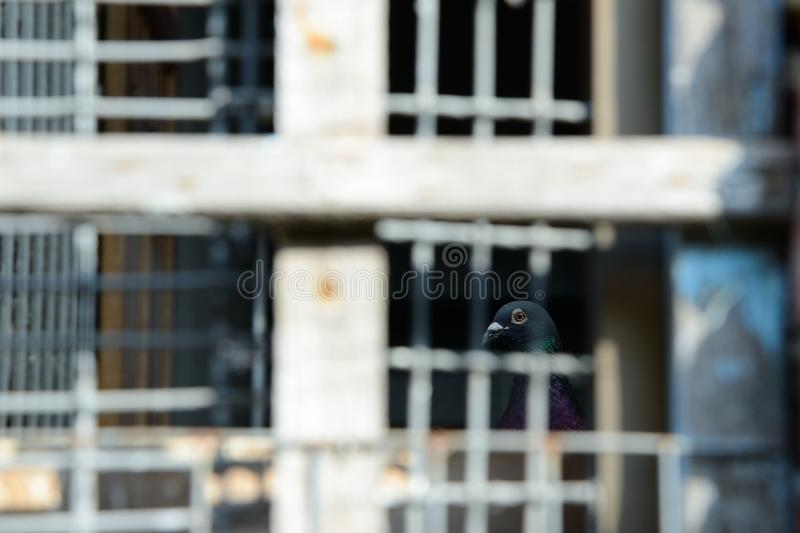 L'uccello è bloccato nella gabbia fotografia stock libera da diritti