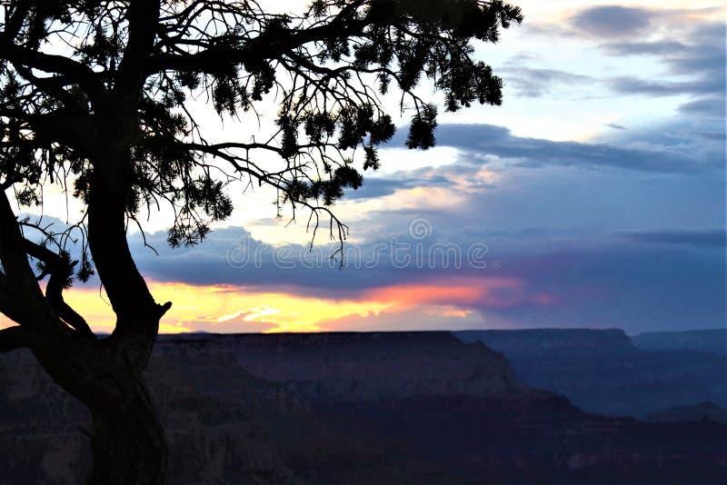 L'uccello di Phoenix si rannuvola il canyon immagine stock
