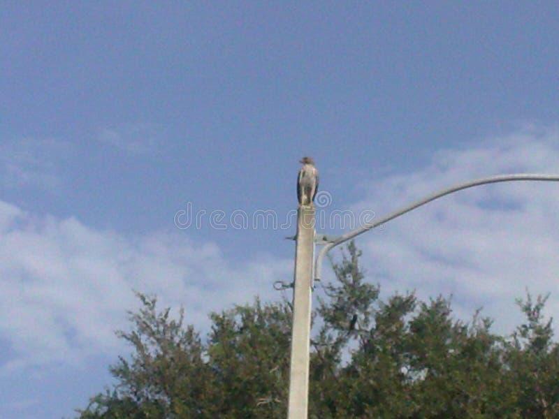 L'uccello di prega fotografia stock libera da diritti