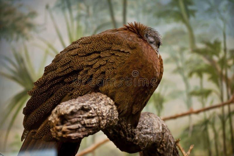 L'uccello di sonno immagini stock