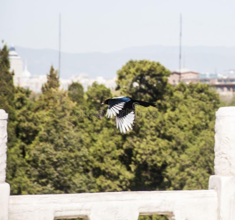 L'uccello fortunato immagine stock libera da diritti