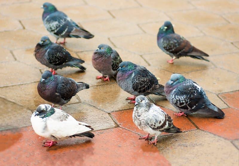 L'uccello si è tuffato passeggiate attraverso le pozze nel parco fotografia stock