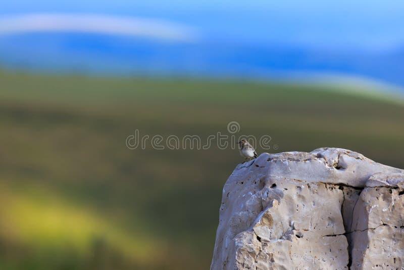 L'uccello si siede sull'orlo di una scogliera fotografia stock