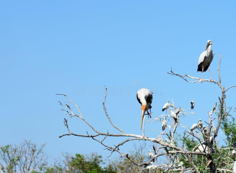 L'uccello si siede sulla corona dell'albero fotografie stock