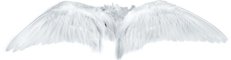 L'uccello traversa il bianco volando fotografia stock