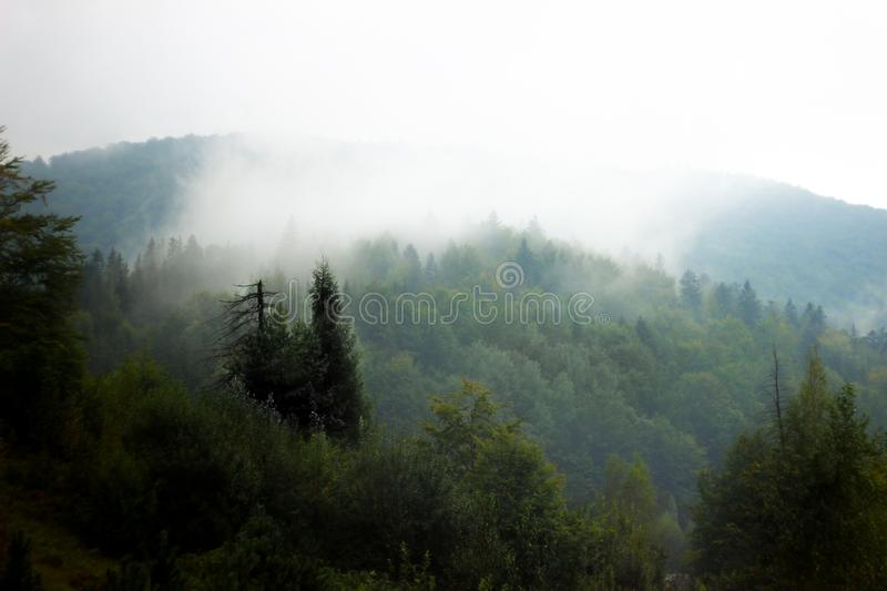 l'ucraina Yaremche Foresta dopo pioggia nave immagini stock libere da diritti