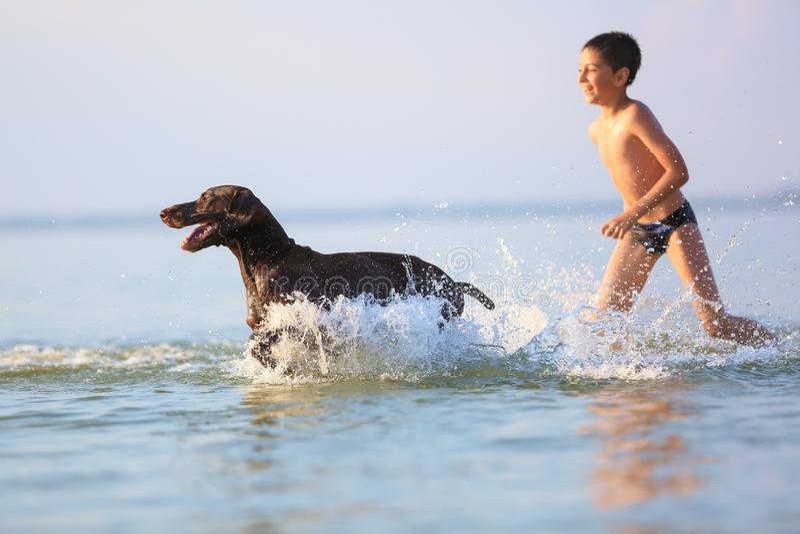L?ufe des kleinen Jungen, Spiele mit dem jagenden braunen Hund im Wasser Gl?ckliche Kindheit Sch?ner sonniger Sommertag Ort von E stockbild