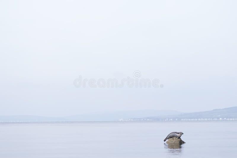 L'un repos minimal simple isolé de joint s'est reposé sur la roche dans l'océan de mer images stock