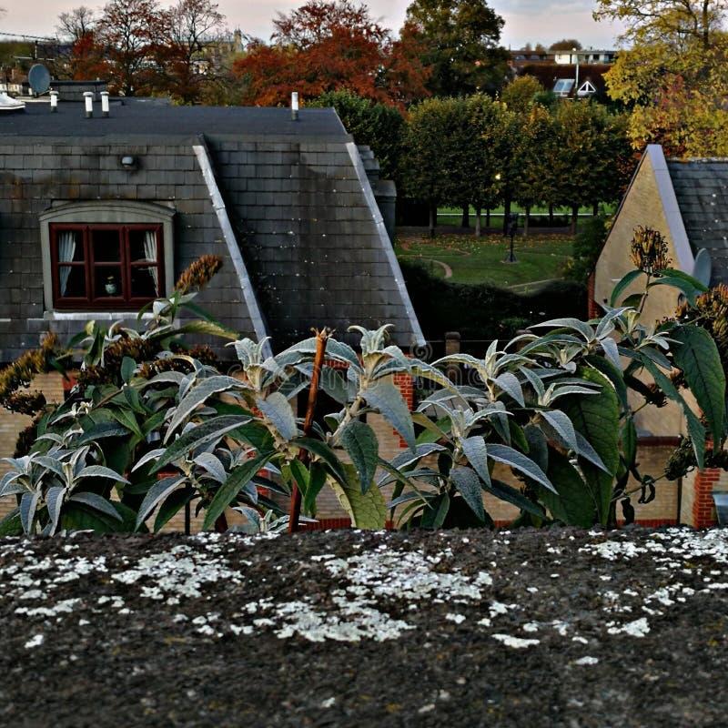 L'une vie Windsor photo libre de droits