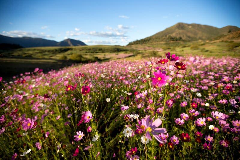 L'universo fiorisce i colori fotografie stock