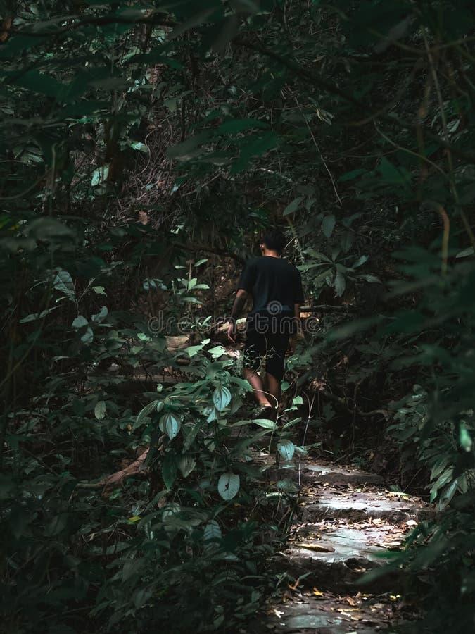 L'uomo è viaggio e scherzare nella giungla per buon sano immagini stock libere da diritti