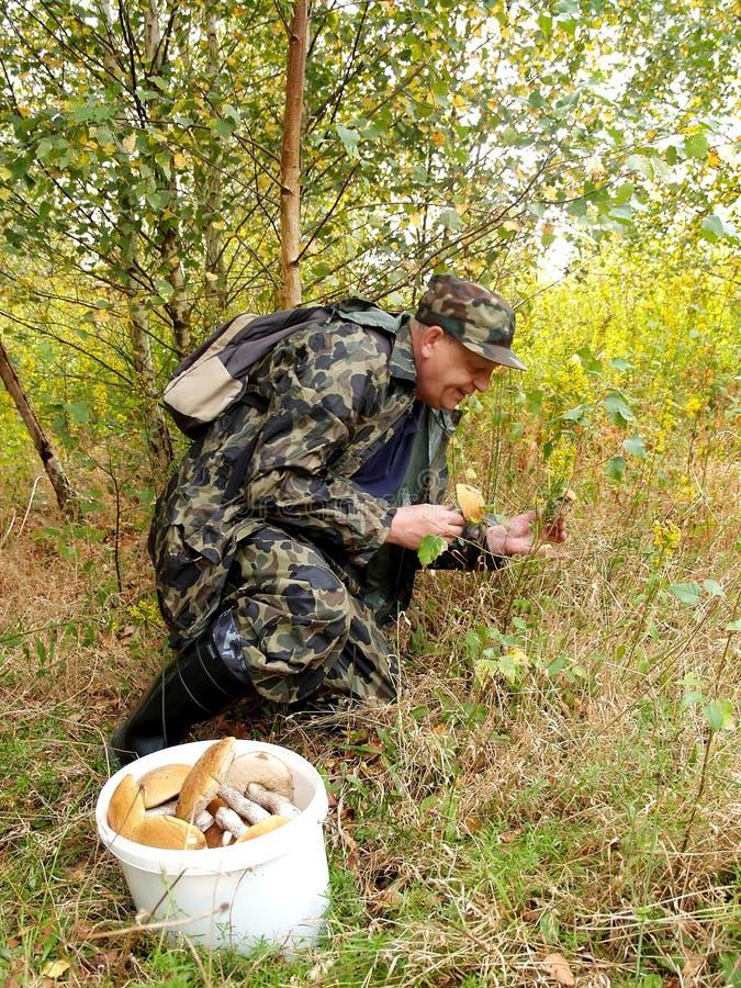 L'uomo anziano riunisce i funghi nel fuoco di legno su un secchio fotografia stock