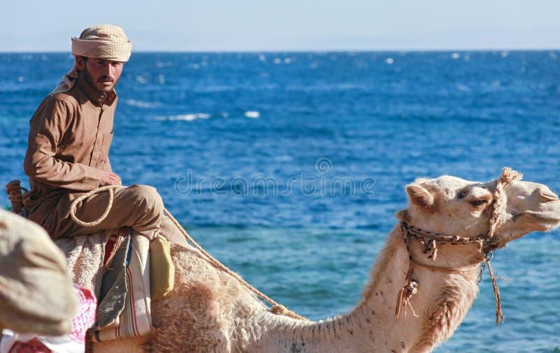 L'uomo beduino guida un cammello fotografie stock libere da diritti