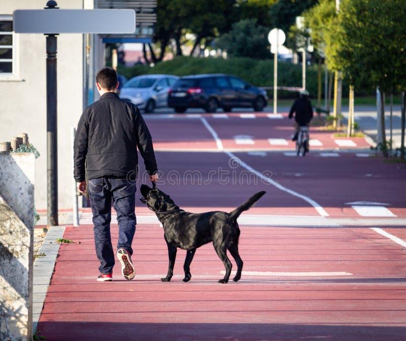 L'uomo cammina Labrador nero immagine stock libera da diritti