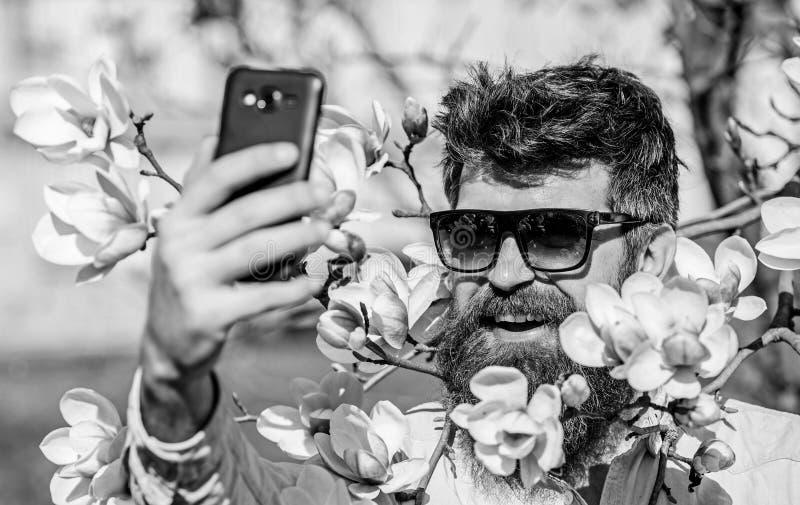L'uomo con la barba ed i baffi indossa gli occhiali da sole il giorno soleggiato, fiori della magnolia su fondo Pantaloni a vita  immagini stock