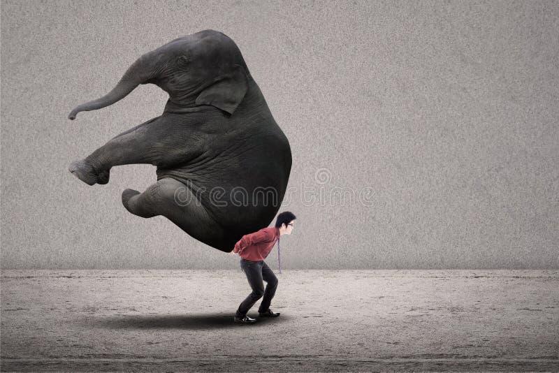 L'uomo d'affari porta l'elefante su grey immagini stock