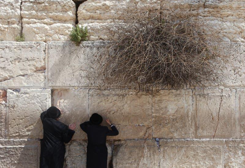 L'uomo ebreo ortodosso prega alla parete occidentale fotografia stock