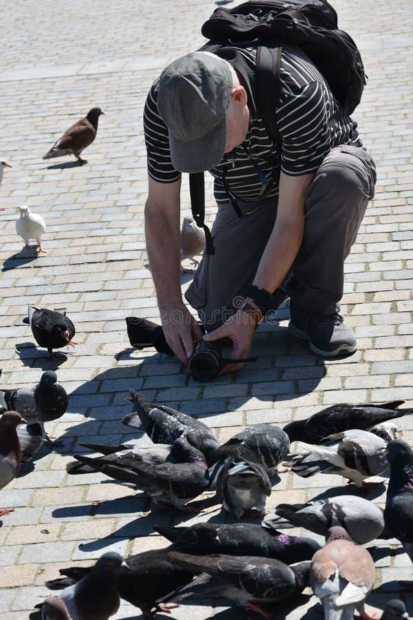 L'uomo filma i piccioni immagini stock libere da diritti