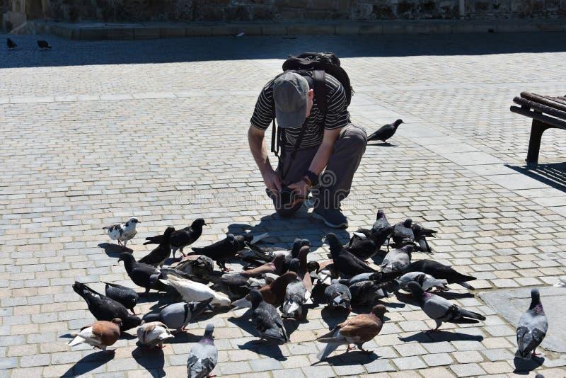 L'uomo filma i piccioni fotografia stock