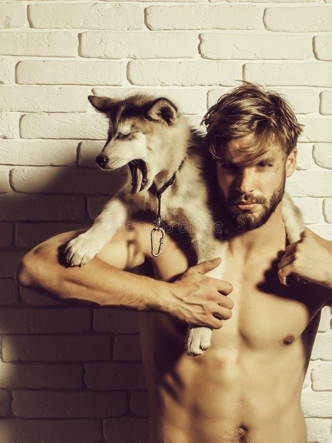 L'uomo muscolare con l'ente sexy tiene i cani del husky, animali domestici del cucciolo fotografie stock libere da diritti