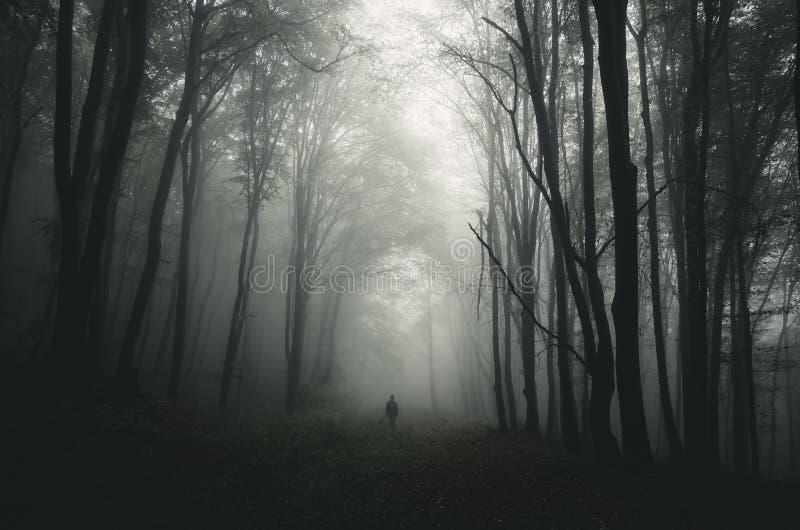 L'uomo nello scuro ha frequentato la foresta con gli alberi giganti immagine stock libera da diritti
