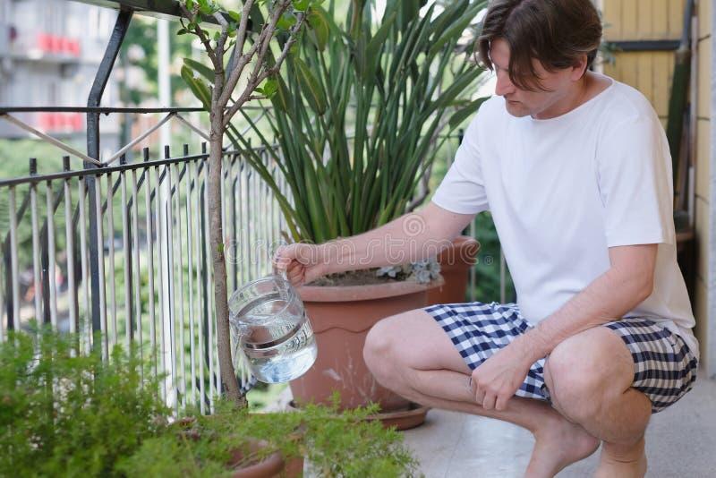 L'uomo, occupante, versa le piante decorative fotografia stock