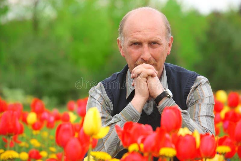 L'uomo si siede sul campo dei tulipani fotografie stock