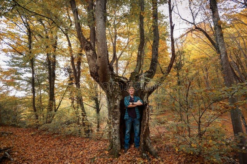 L'uomo sta nel tronco di un albero fotografie stock