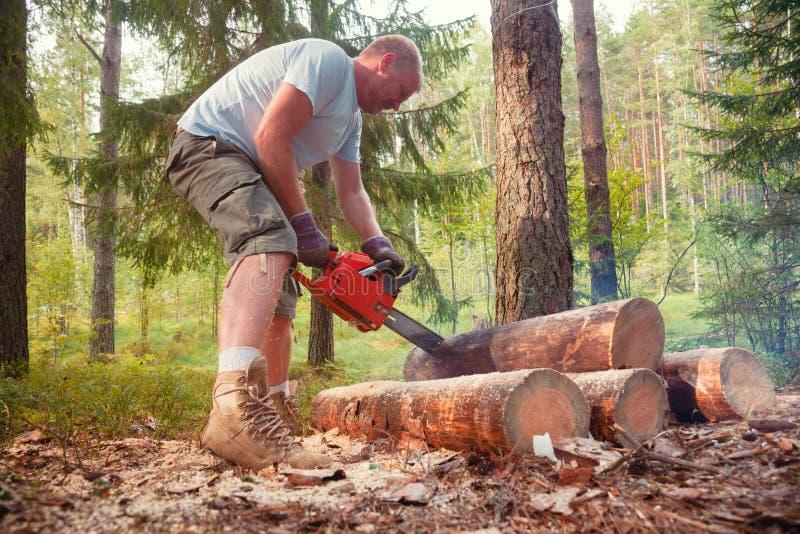 L'uomo taglia i ceppi della legna da ardere con la motosega in una foresta dell'estate immagini stock libere da diritti