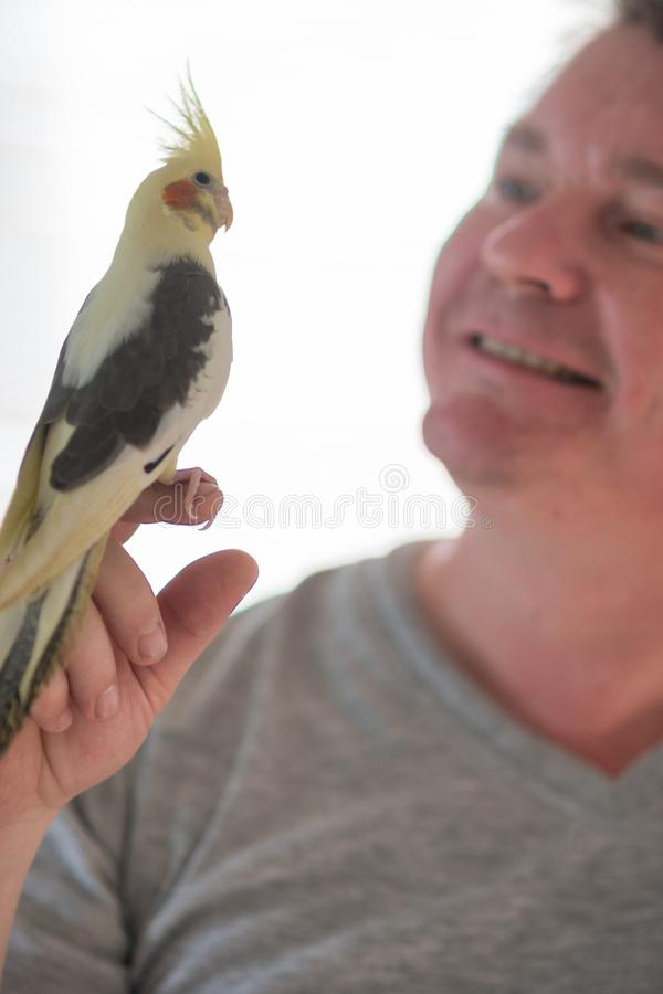 L'uomo tiene un pollo tenuto in mano del pappagallo fotografia stock libera da diritti