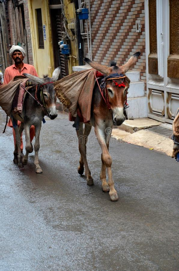 L'uomo trasporta le merci sui muli in vie strette Lahore Pakistan fotografia stock libera da diritti