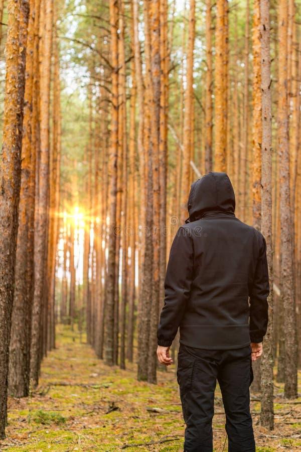 L'uomo turistico del viaggiatore esamina l'alba in uno spazio della copia dell'abetaia fotografia stock libera da diritti
