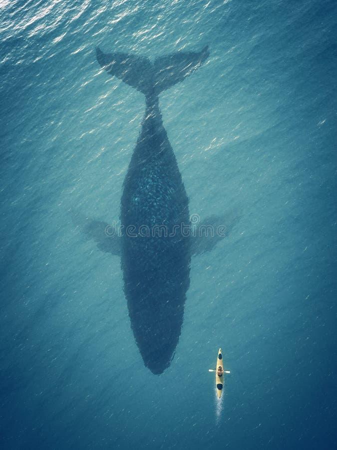 L'uomo in una barca galleggia accanto ad un grande pesce, balena fotografie stock