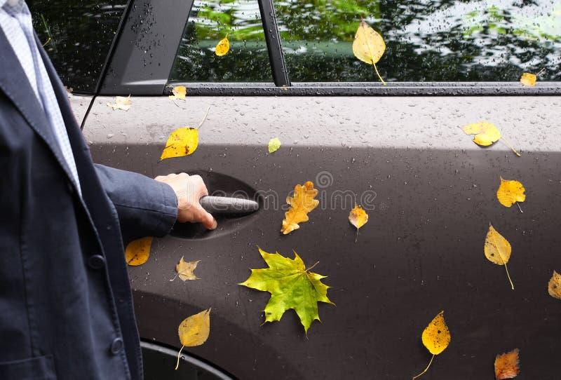 L'uomo in vestito tiene indietro la maniglia di porta dell'automobile, fogliame giallo di autunno immagini stock libere da diritti