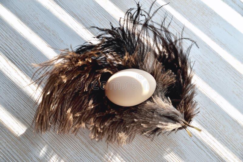 L'uovo si trova sulle piume dello struzzo, lampadina, fondo di legno naturale immagini stock