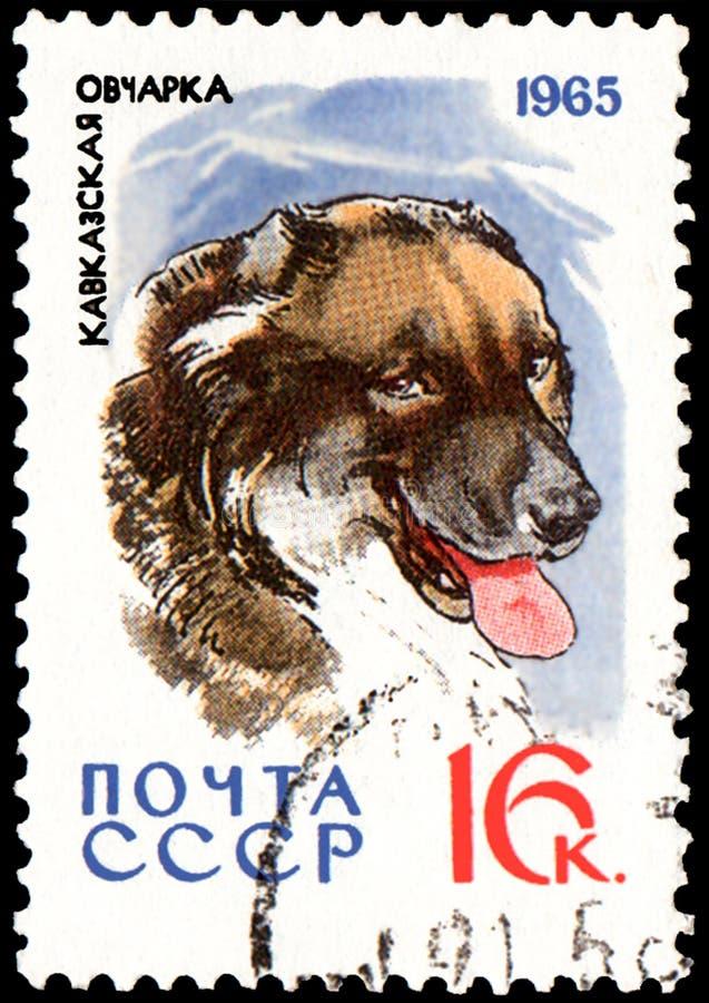 L'URSS - CIRCA 1965: il francobollo, stampato in URSS, mostra un cane da pastore caucasico, la serie di caccia ed i cani di servi immagini stock libere da diritti
