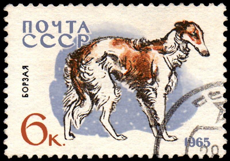 L'URSS - CIRCA 1965: il francobollo, stampato in URSS, mostra un cane dei borzoi, la serie di caccia ed i cani di servizio immagine stock