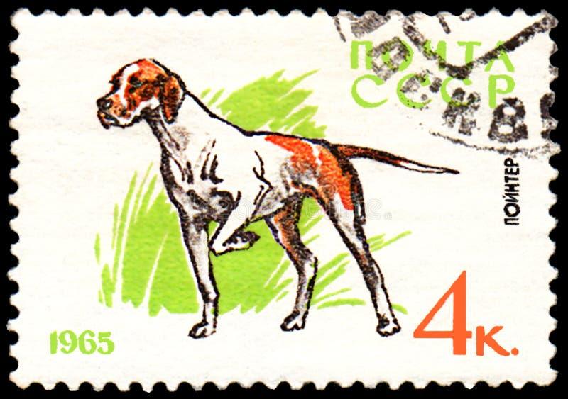 L'URSS - CIRCA 1965: il francobollo, stampato in URSS, mostra un cane del puntatore, la serie di caccia ed i cani di servizio fotografie stock