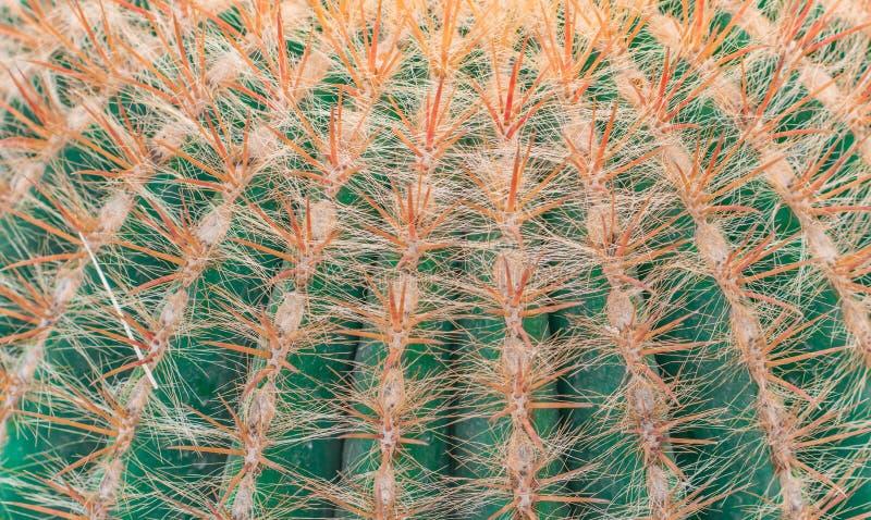 L'usine de Cactus photographie stock