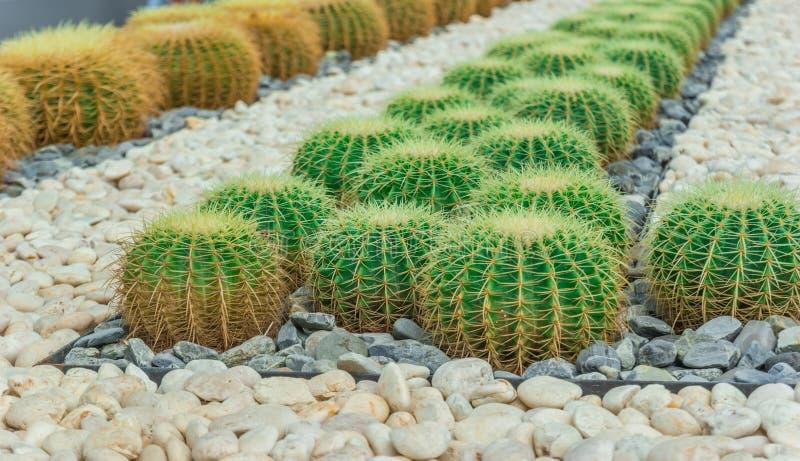 L'usine de Cactus image libre de droits