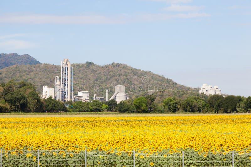 L'usine signifie un champ de tournesol photos libres de droits
