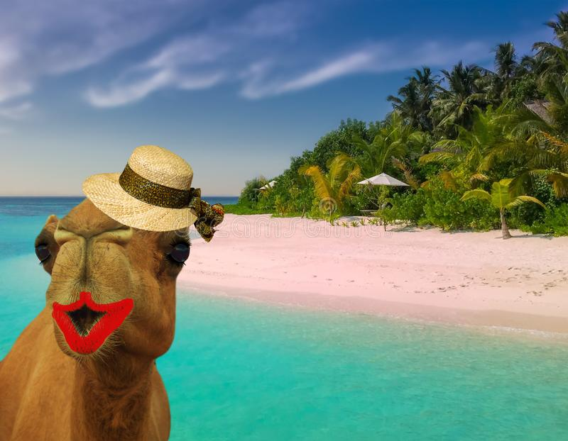 L'uso divertente stesso del cammello di concetto di viaggio compongono ed il cappello di paglia di signora ad una spiaggia tropic fotografia stock libera da diritti