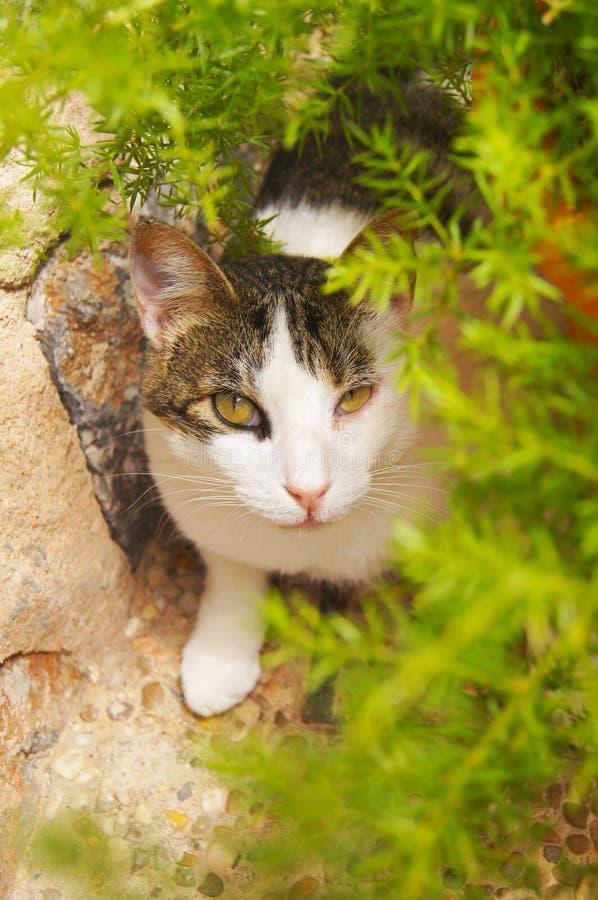 L'uso spagnolo del gatto compone:) fotografia stock