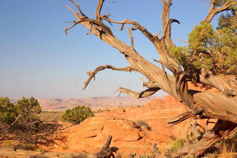 L'Utah fotografie stock libere da diritti