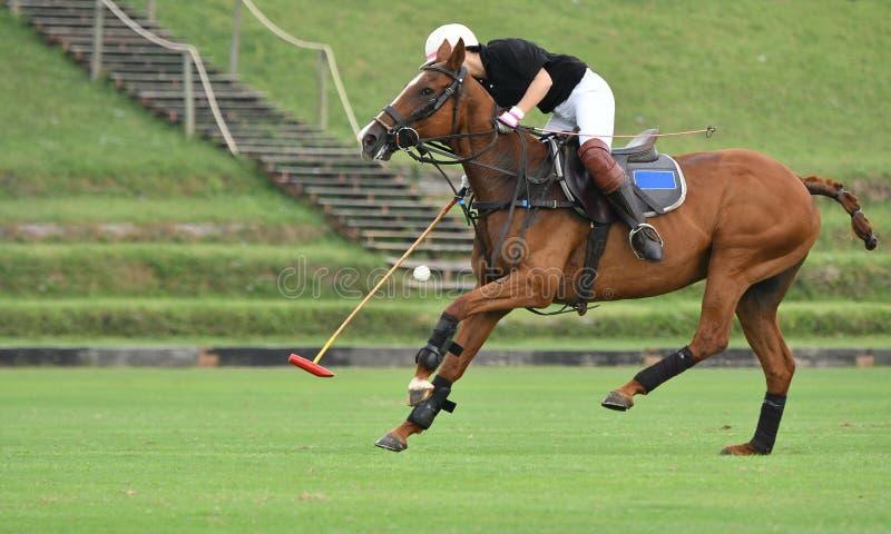 L'utilisation de joueur de polo de cheval un maillet a frapp? la boule photographie stock