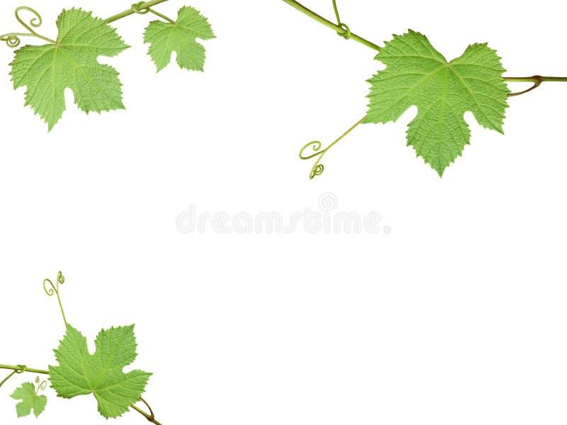 L'uva verde va su una priorità bassa bianca fotografia stock