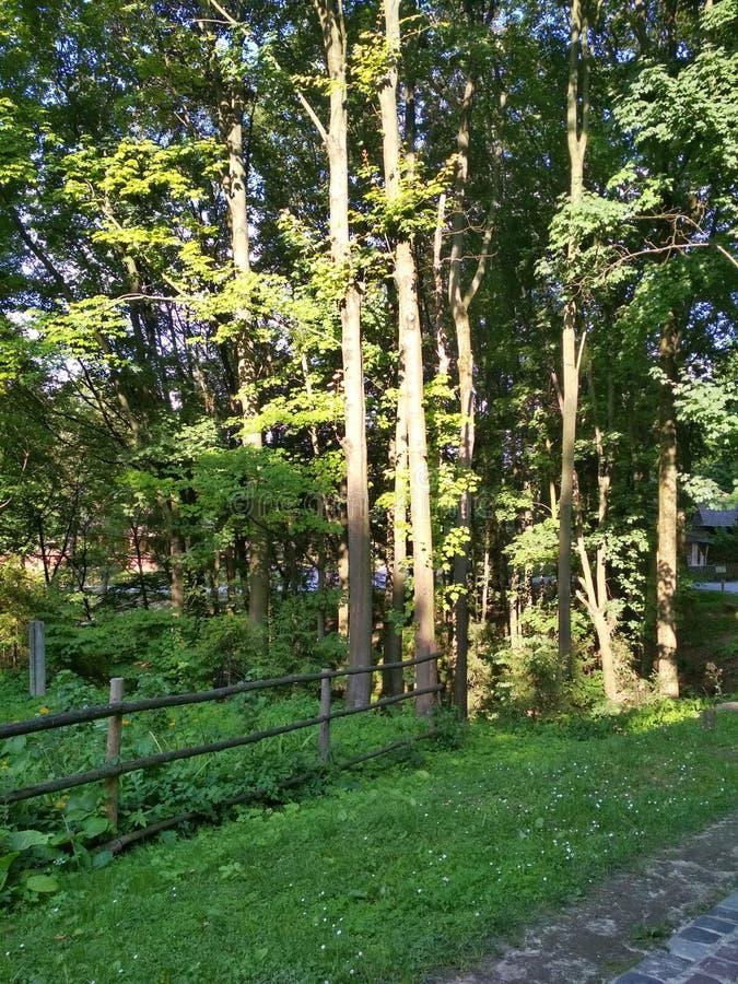 L ` viv Paisagens da flora e fauna de áreas do parque da capital de Ucrânia ocidental fotos de stock