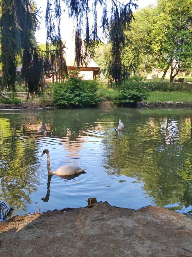 L ` viv Paisajes de la flora y fauna de las áreas del parque de la capital de Ucrania occidental imagen de archivo libre de regalías