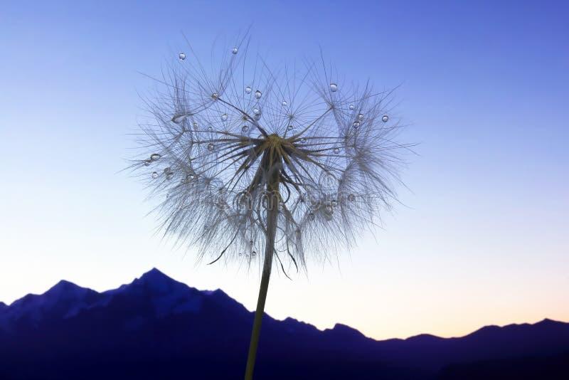 L?wenzahnblume mit Wassertropfen auf einem Hintergrund des bergigen Gel?ndes lizenzfreies stockbild